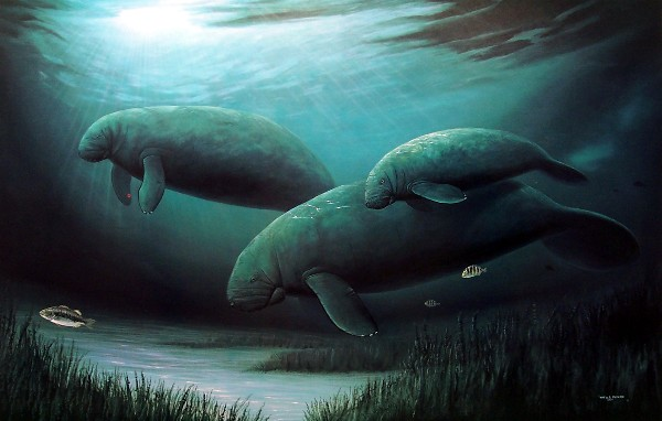 WYLAND - Endangered Manatee - Signed Print - 18 x 24 inches