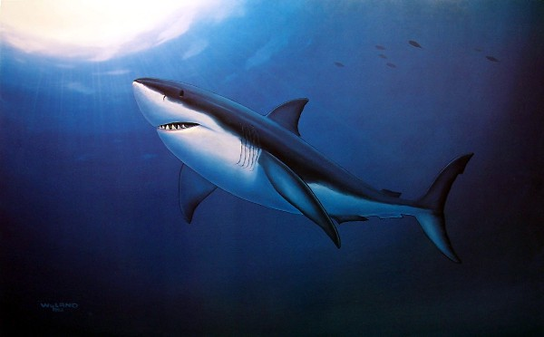 WYLAND - Great White Shark - Signed Print - 18x24 inches