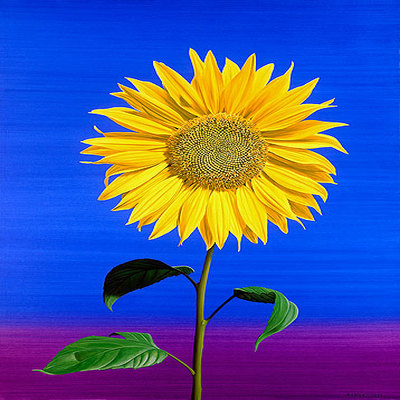 ROBERTO AZANK - Yellow Sunflower - Giclee on Paper - 24x29 inches