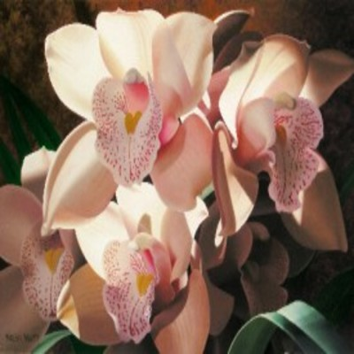 BRIAN DAVIS - Cymbidium Spray - Giclee on Canvas - 30x40  inches