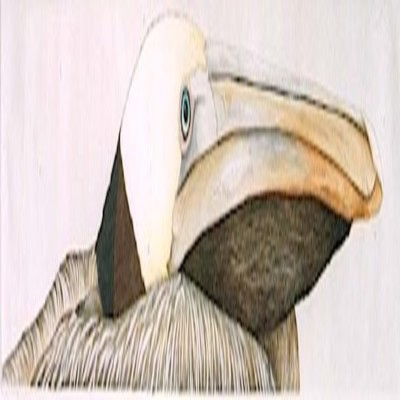NANCY CHARLES - Brown Pelican - Hand Colored Etching - 6x30 inches